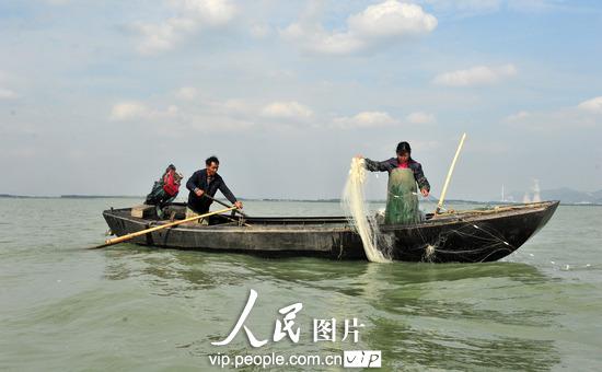 10月20日,安徽巢湖市卧牛山街道渔民在捕鱼.