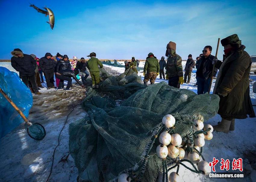 新疆乌伦古湖传统千米大拉网踏雪寻鱼【7】