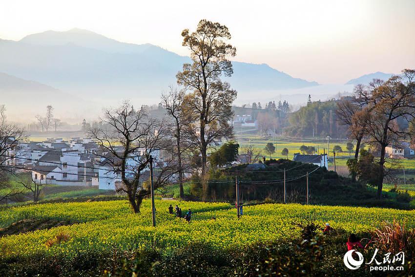 清晨的卢村吸引了不少摄影爱好者。