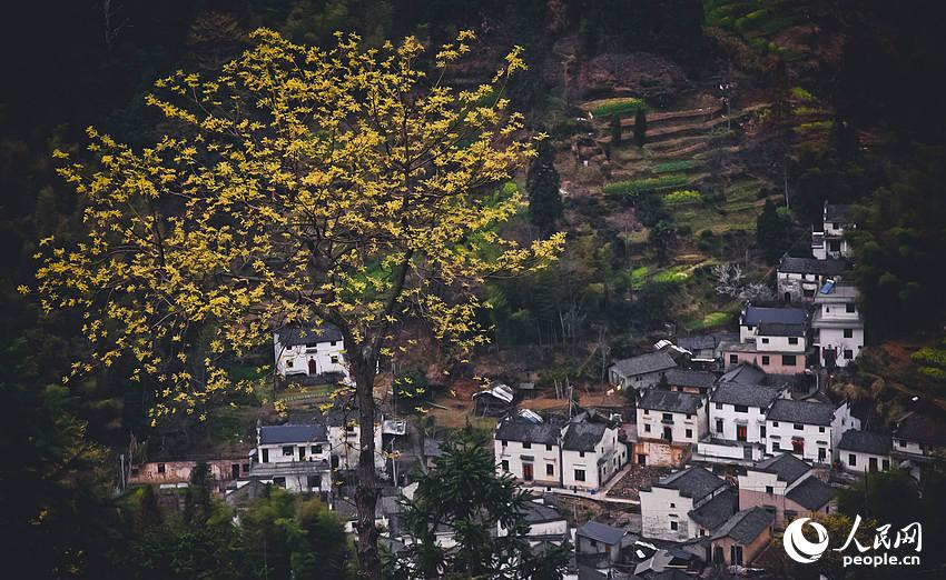 休宁县木梨村。这个高山村落更像是一座世外桃源,也是休宁藏在深山间给人们的惊喜。