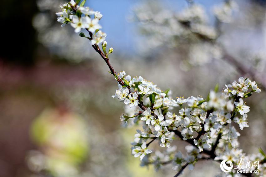 沿着蜿蜒小道前行,两旁的桃花、梨花、油菜花相映成趣。