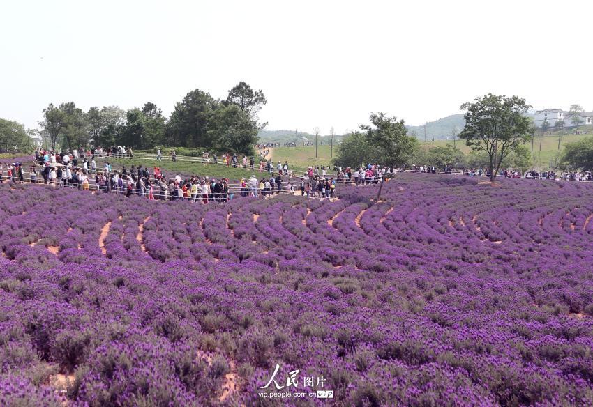 紫色的公路风景