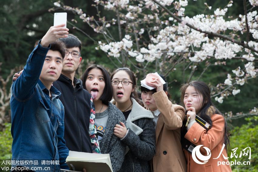 广西大学美景_高清:南京林业大学烂漫樱花醉游人【4】--图说中国--人民网