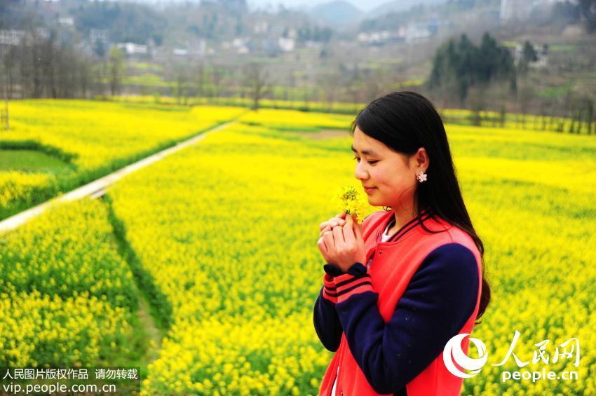 重庆酉阳自治县铜鼓乡铜西村,这里连片500亩的油菜花正在绵绵的春雨之中绽放。(陈碧生/人民图片)详细