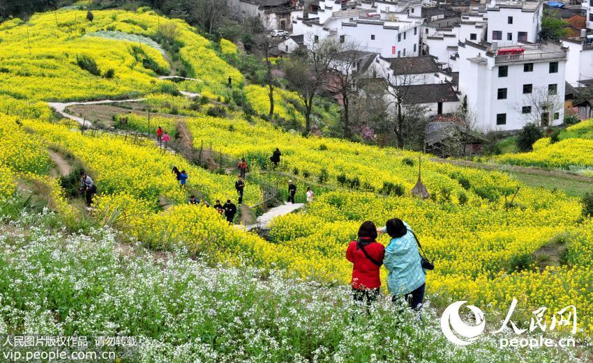 敦煌农村田园风景