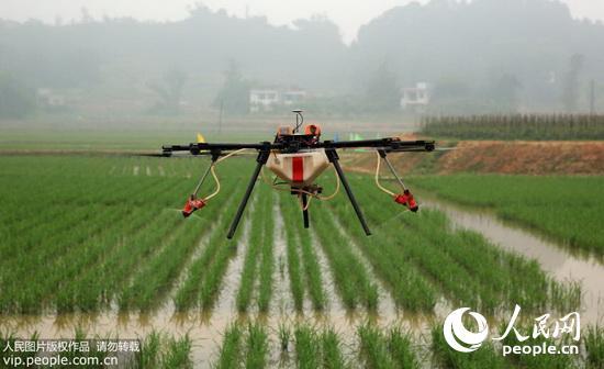 2015年5月5日,在四川泸州市江阳区分水岭镇董允坝村,植保无人机在稻田