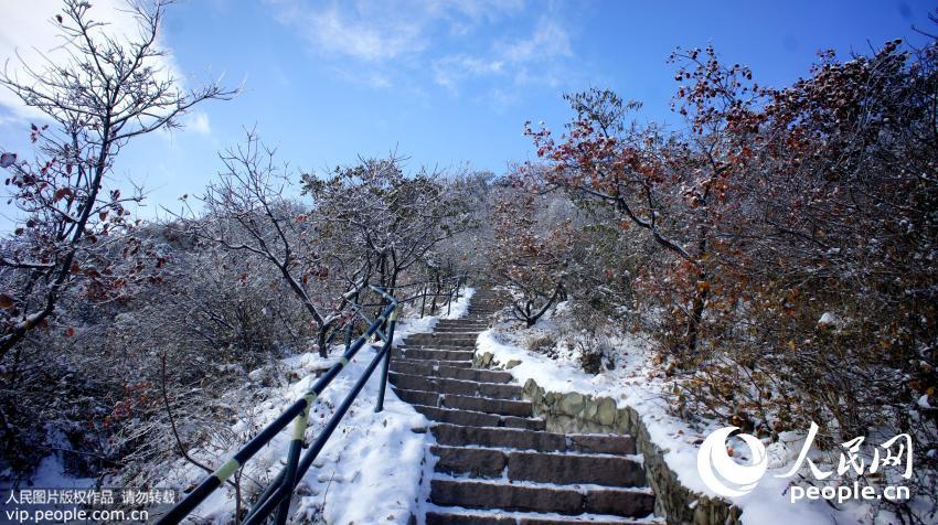2015年11月25日,北京香山顶峰香炉峰映衬在蓝天之中,格外壮观美丽。  当日,北京雪后初晴,西山晴雪美景再现游客眼帘,位于香山山峰顶端的景区积雪冰挂满枝头,在蓝天白云的映衬下格外美丽。(樊甲山/人民图片)