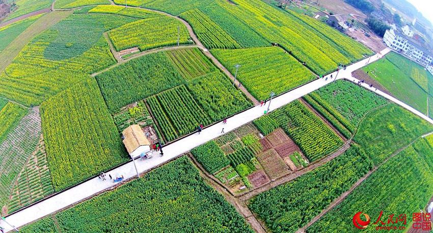 3月12日,浙江省台州市仙居县种植了大片的油菜,一到春天,漫山遍野的金黄色点缀在群山之间,如诗如画,不仅成了农民增收的一项主要产业,还带动了乡村旅游的发展。(qazzaq321/图说中国)