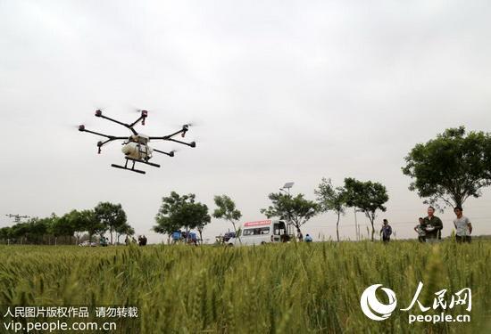 5月6日,农业部门利用直升飞机,无人机,高杆喷雾机等先进的大型植保