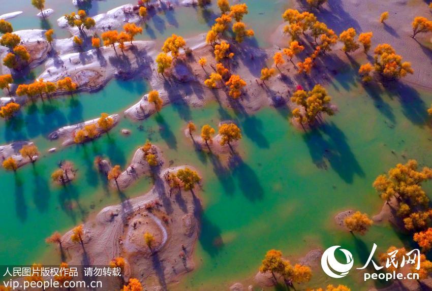 航拍新疆塔里木河胡杨林色彩斑斓景色壮美-新闻中心