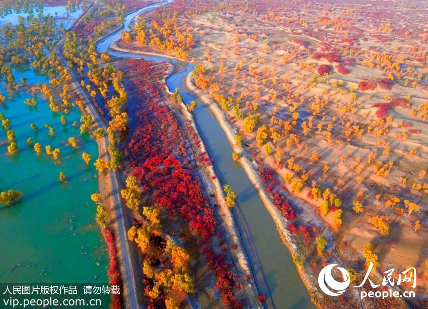 航拍新疆塔里木河胡杨林