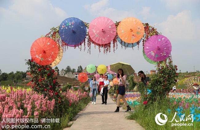 """市禄市镇六水沟村""""百万玫瑰---梦幻花海""""生态园的玫瑰长廊赏花休闲."""