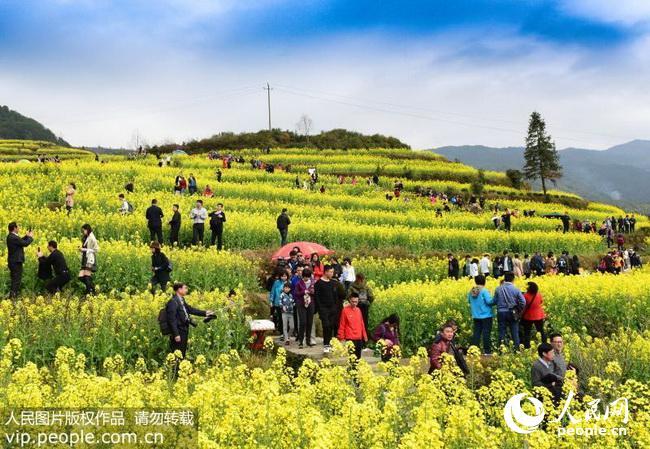 2018年3月17日,江西省婺源县溪头乡江岭村游客在油菜花田游览.