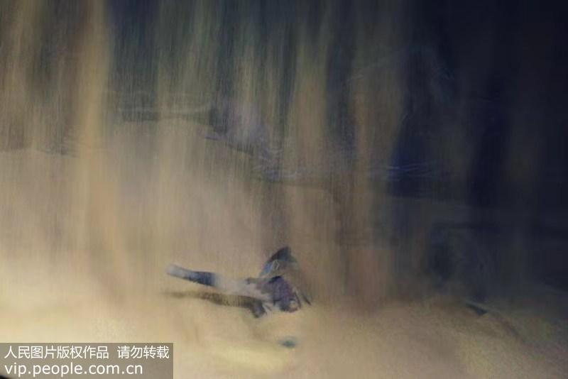 """中国首部""""沙秀""""大型历史情景剧《回道张掖》大揭秘"""
