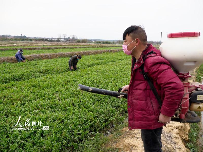 男男网站安徽宣城:防疫扶贫两不误春耕生产正当时